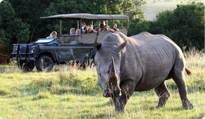 Day Tour from Johannesburg | Pilanesberg