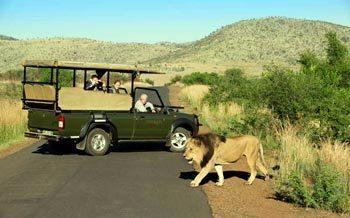 Pilanesberg Game Drives
